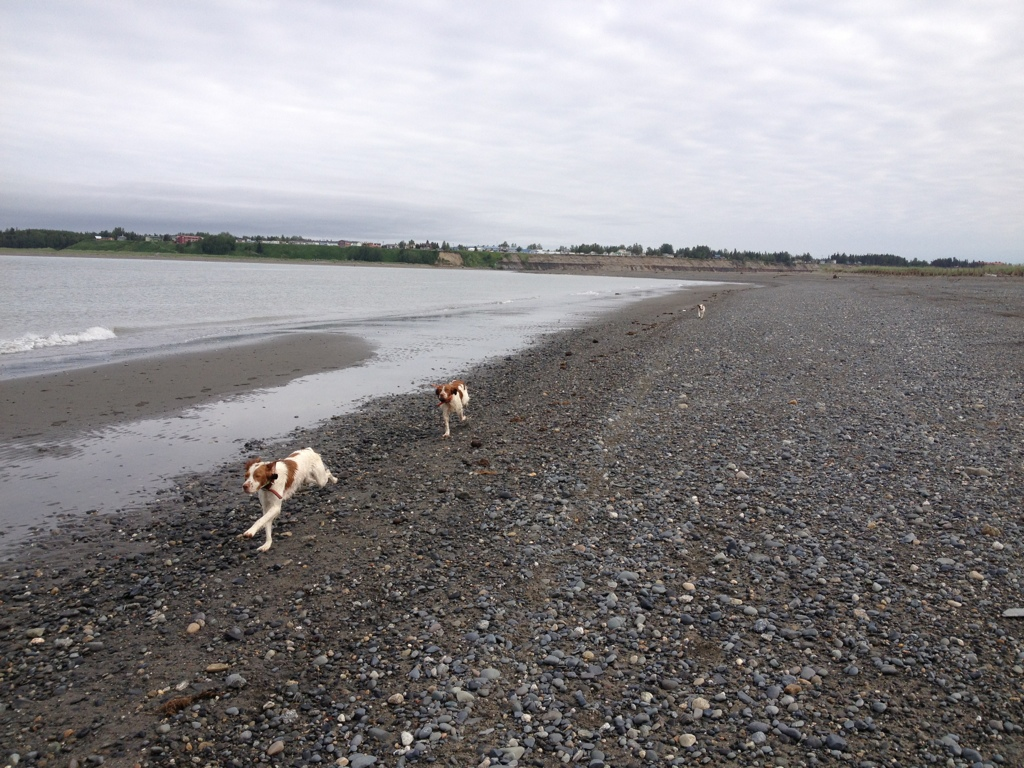 Ruby, Copper and Henry running the Kenai Beach